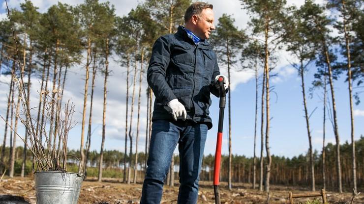 Prezydent zachęca do sprzątania lasów i sadzenia drzew