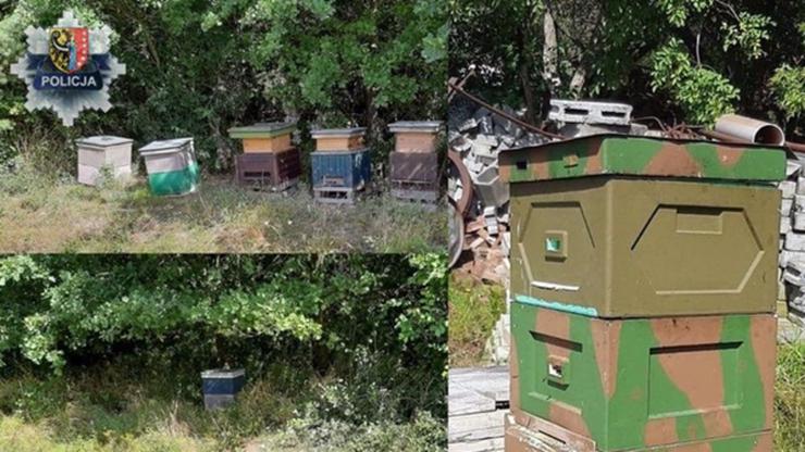 Kradli ule z pszczołami. Zatrzymała ich policja