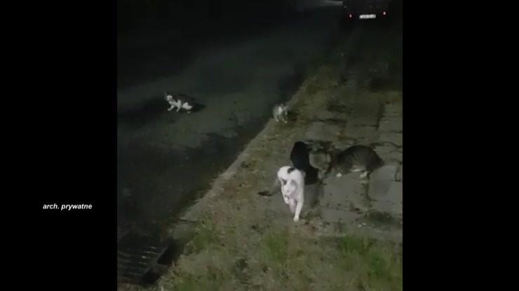Trzyma w domu ok. 40 kotów. Sąsiedzi zbudowali zasieki